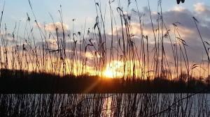 Stadtwaldsee, sogar mit Hundefreiflächen im angrenzenden Gebiet.