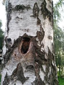 Baumgeschichten..
