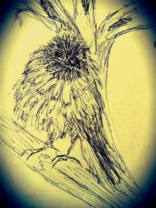 Vogel4